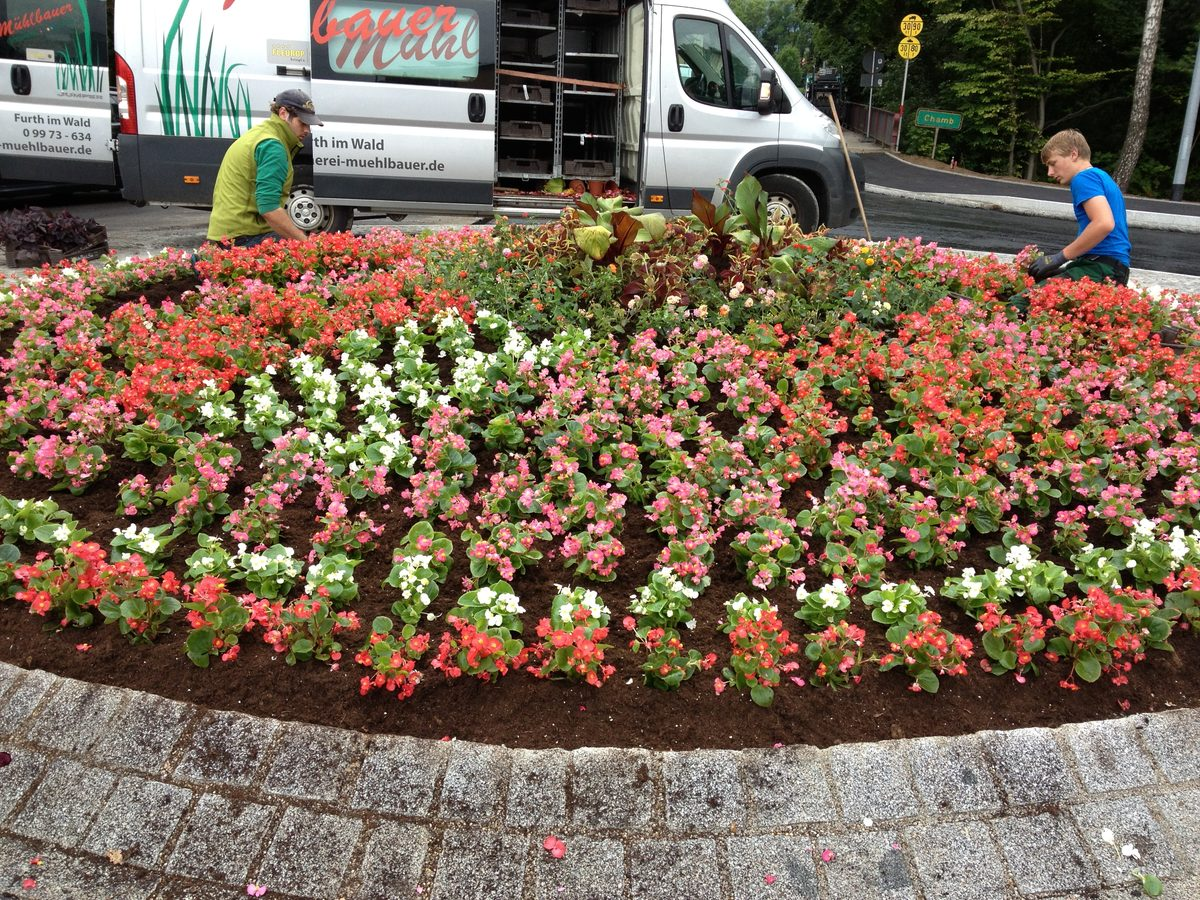 Blumen Und Pflanzen Mühlbauer Ihr Gartenbau Und Floristik