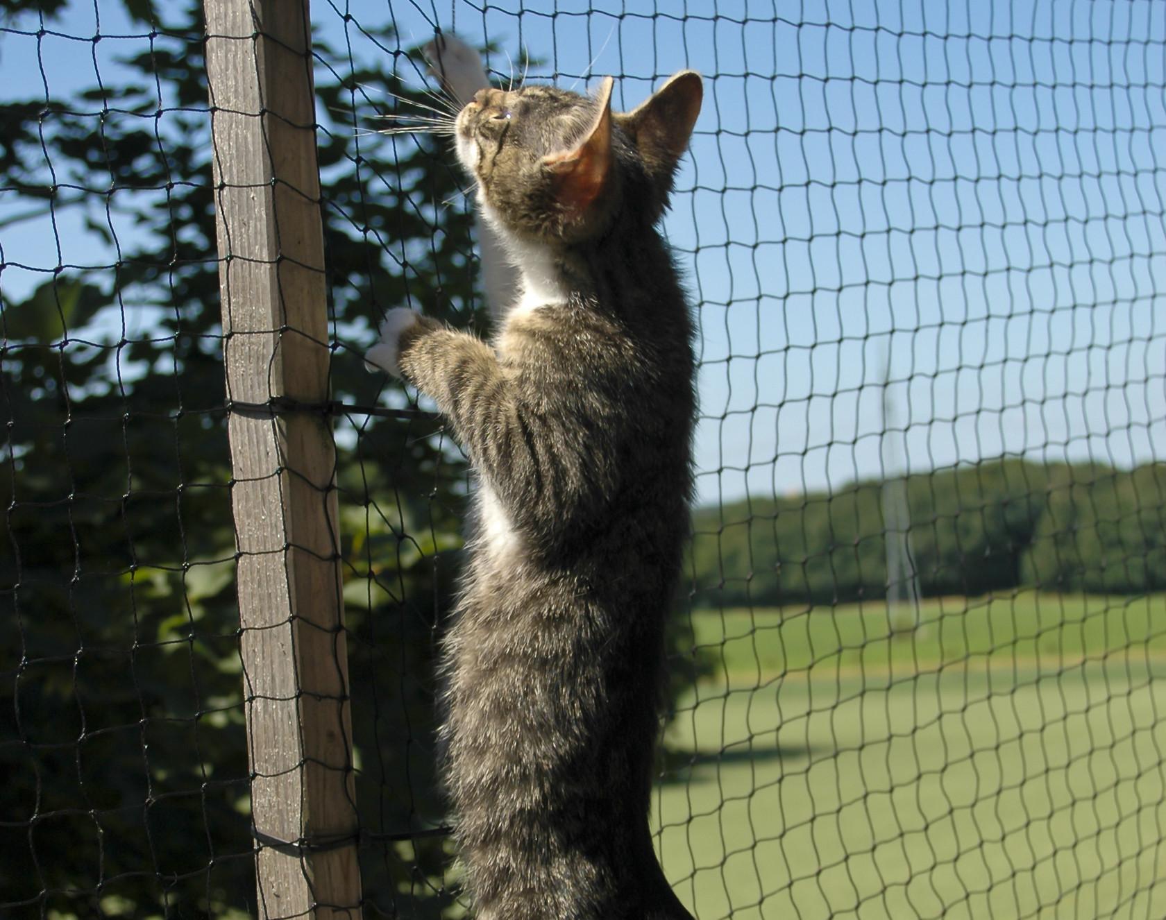 Katzensicherheiten