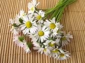 Heilpflanze des Jahres 2017, Gänseblumchen, Naturheilkunde, alternative Medizin