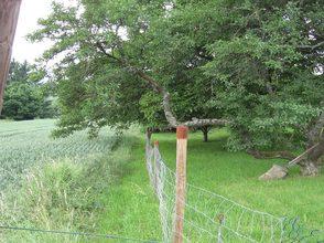 Überhang bei Obstbäumen im Außenbereich